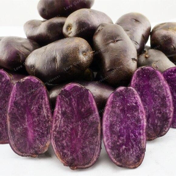 100 piezas de bonsái púrpura de patata dulce deliciosa nutrición verde vegetal bonsái hogar jardín NO GMO el mejor regalo