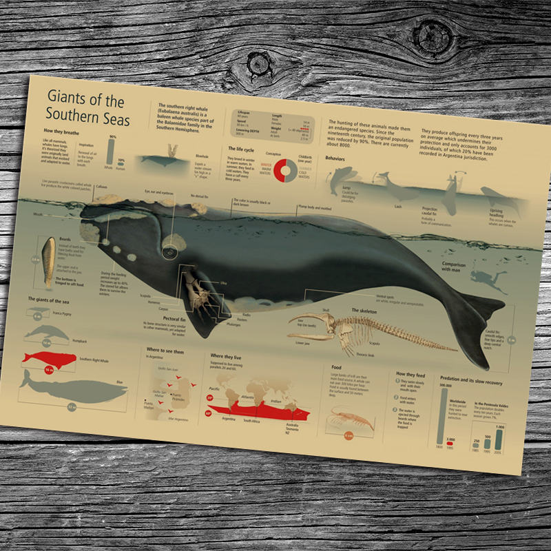 Famous Wooden Whale Wall Decor Pattern - Art & Wall Decor ...