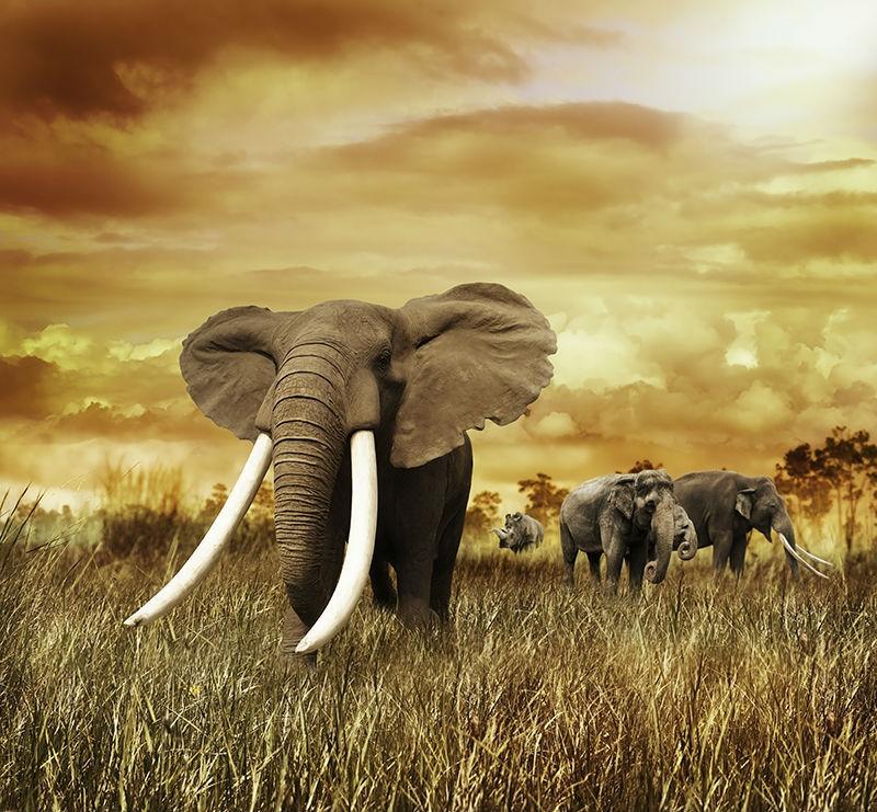 Large African Elephant Grassland Animal Mural Wallpaper
