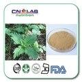 10:1 organic stinging nettle leaf herb extract powder