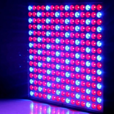 14W Red + Blue LED Plant Grow Light for Indoor Plants EU OR US PLUG