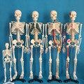 """85 cm vida tamanho 33.5 """"esqueleto humano modelo anatômico anatômico anatomia escultura crânio head modelo artista osso muscular do corpo"""