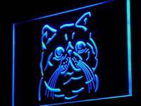 I986 Exotic Shorthair Chat Pet Shop Light Enregistrez-vous Sur/Off 20 + Couleurs 5 Tailles