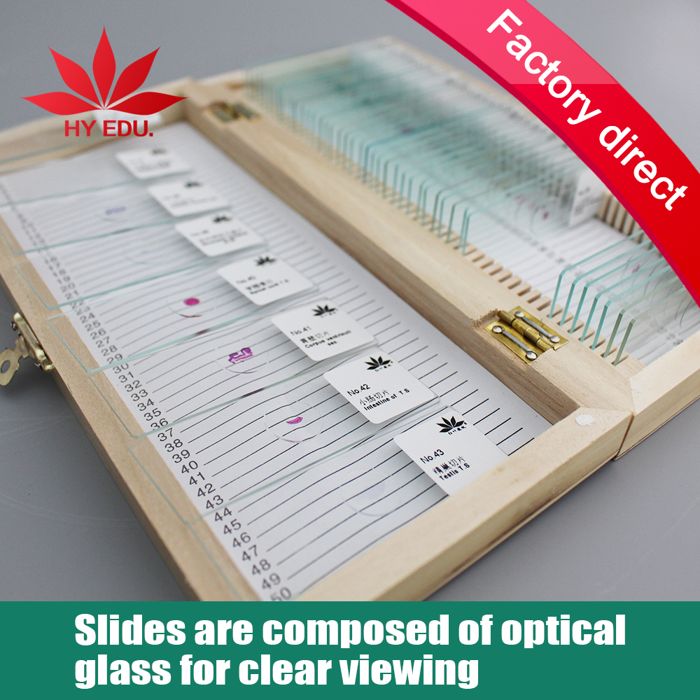 50 permanent piece of cells biological specimens slice Microscope slides  цены