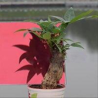 Red & Silver Efeito Espelhado de Uma Forma Reflexiva Etiqueta Da Janela de Vidro de Privacidade Filme New 1.52x20 m (5ft x 66ft)