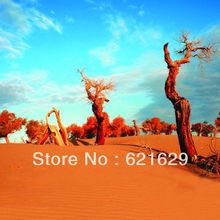 Desert vegetation 8'x8′ CP Computer-painted Scenic Photography Background Photo Studio Backdrop DT-11-171
