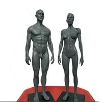 30cm Height Human Anatomical Anatomy Skull Blood Sculpture Head Body Model Muscle Bone Model Male and Female