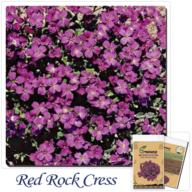 200pcs perennial flowering groundcover seeds rock cress bright red 200pcs perennial flowering groundcover seeds rock cress bright red free shipping mightylinksfo