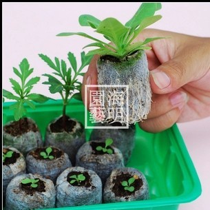 1pc Nursery Tray With Clear Cover 10pcs 30mm Jiffy Soil Pellets Seeds Starting Plugs Indoor Seed Starter Start Planting Set In Pots From Home
