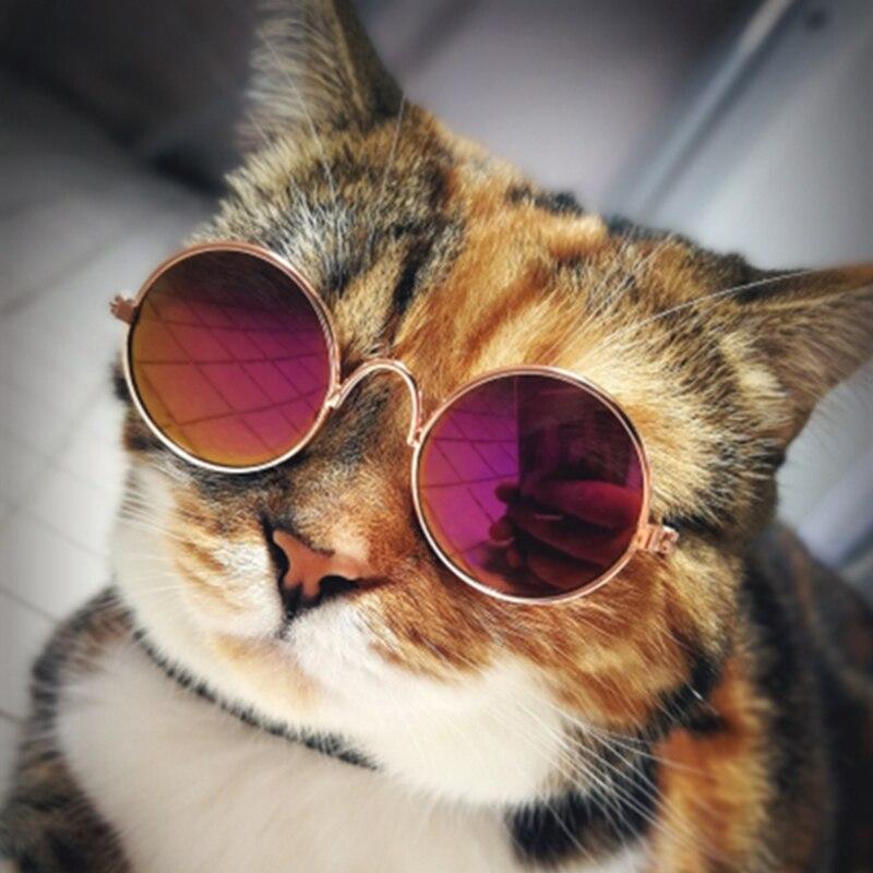Картинки крутых котят в очках