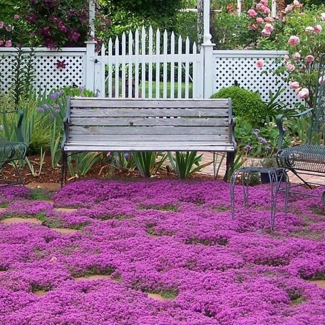 Thyme seeds perennial flower seeds out of the flowers bright and thyme seeds perennial flower seeds out of the flowers bright and beautiful garden mightylinksfo