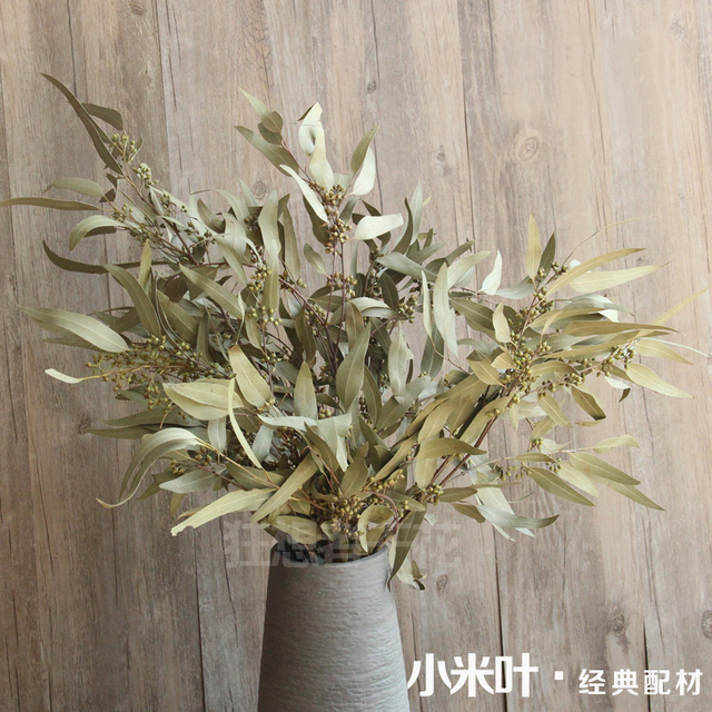 Preserved Eucalyptus Leaf Branch Dried Flowers Craft Gift Material