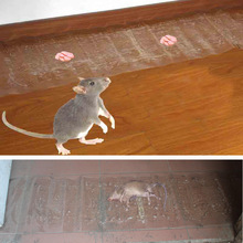 120cm*28cm Mouse Board Sticky Rat Glue Trap Mice Catcher Pest Reject Transparent Magic Carpet