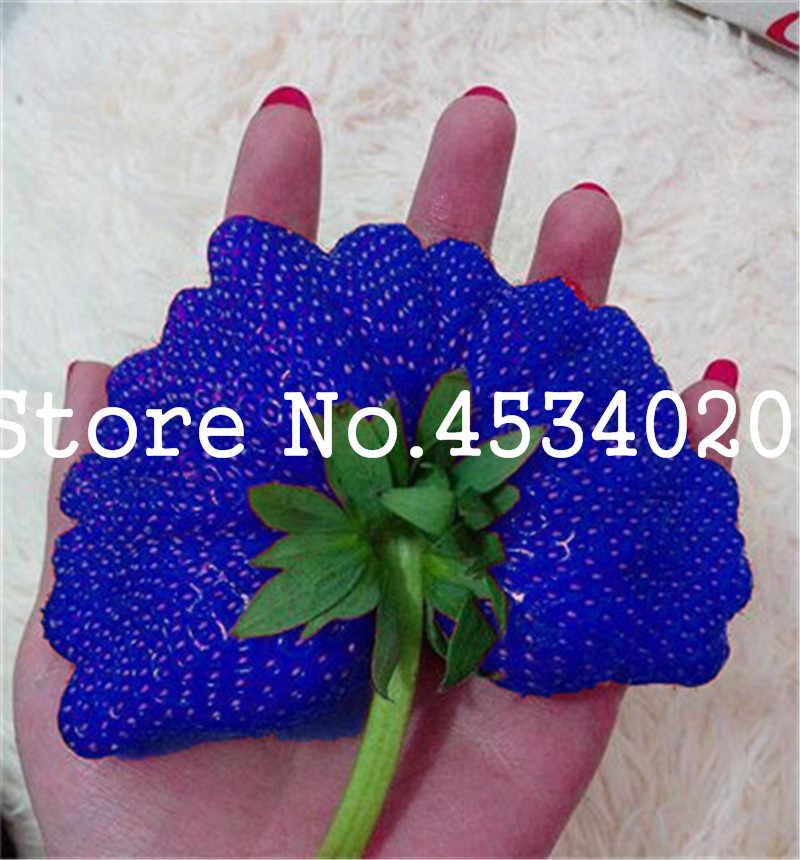 300 шт./пакет синий клубничный бонсай гигантская клубника Плодовое дерево натуральные фрукты овощи без ГМО горшок для карликового дерева для садовые растения