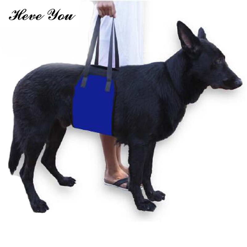 Heve You Harness Running Jogging Pet Dog Protection Belt Adjustable Dog Traction Cats Carry Leash Pet Accessories S~L