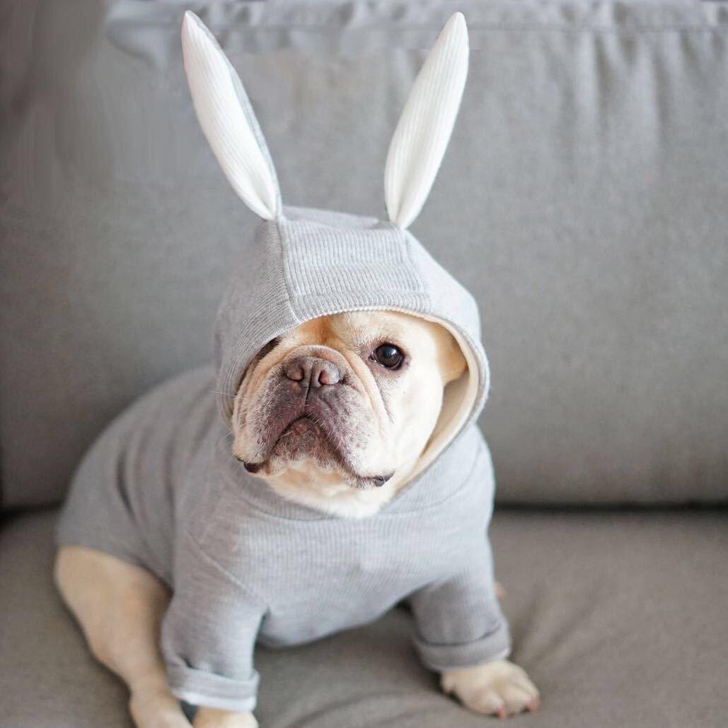 Kawaii Cat Hoodies Hats Sweater Rabbit Dog Pet Clothes Clothing Chihuahua Yorkie Bulldog Schnauzer Corky Bomei Fashion