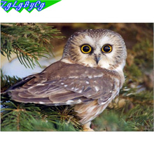 DIY 5D Diamond Animal Owl full Diamond Painting Cross Stitch Kits Diamond Embroidery Patterns Rhinestones M031