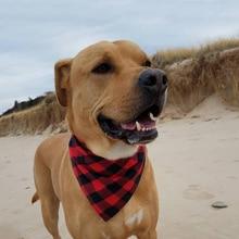 Red Tartan Dog