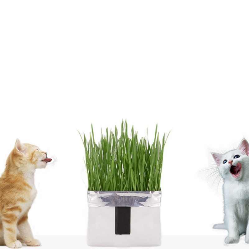 N แมวหญ้าดินปลอดสารพิษชุด-เมล็ดและกระถางดอกไม้สัตว์เลี้ยง Soilless การเพาะปลูกหญ้าแมวผมลูกบอลช่วย digest แมวกระเพาะอาหาร