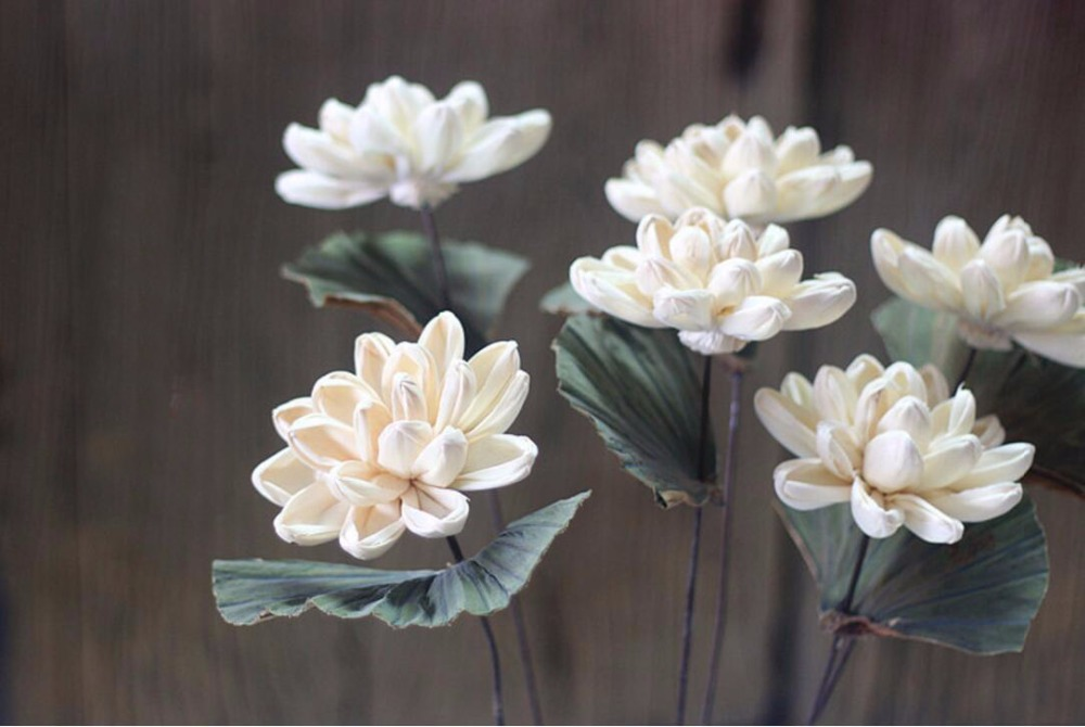 5pcs White Water Lily Dried Flower For Wedding Party Home Hotel Decoration Diy Bouquet Project Accessory