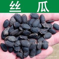 Semillas de Calabaza Semillas de Hortalizas al por mayor Calidad Gana Tasa de Germinación de Semillas de Melón Verduras Oportunidad Real 200 g/Pack