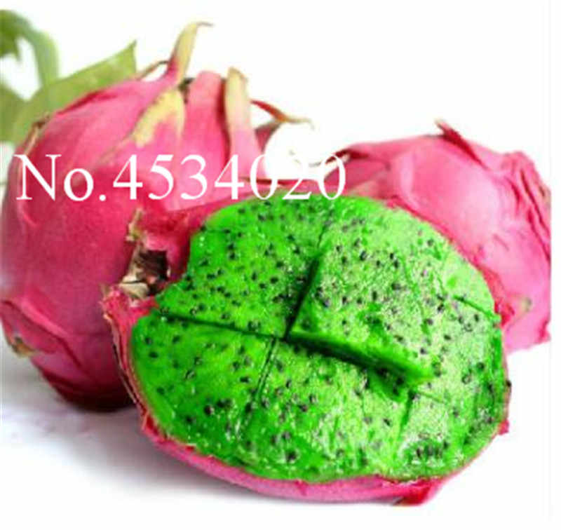 Редкие Драконий фрукт деревья бонсай многолетний растения не ГМО Hylocereus дракон фрукты suculentas домашний сад 100 шт. сочные plantas