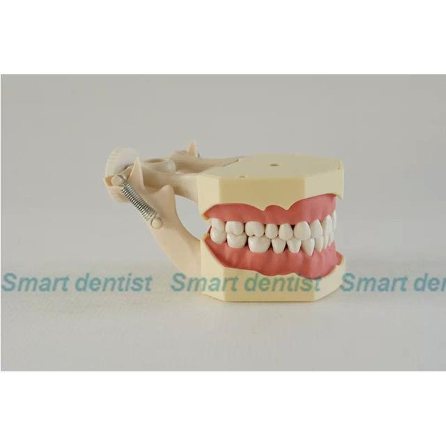 2016 Modelo Typodont NISSIN 200 Compatível Dental Dentes Goma Macia w/32 Dentes Removíveis
