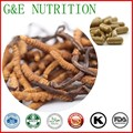 500 mg x 800 pcs Cordyceps Orgânicos/Worm grama/Cordyceps sinensis/Chinês lagarta fungo Extrato Cápsula livre grátis
