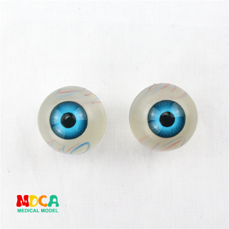 Plastic eyeball anatomy ornament gift pendant key buckle human.organ anatomy medical teaching toy YSK003Plastic eyeball anatomy ornament gift pendant key buckle human.organ anatomy medical teaching toy YSK003