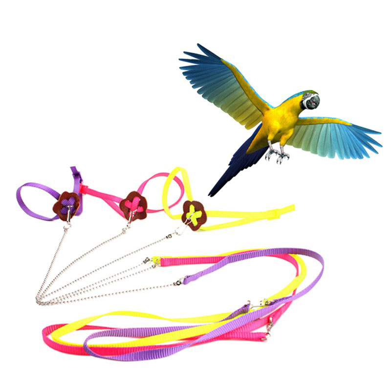 Adjustable Parrot Leash Pet Lizard Birds Harness Leash Outdoor Training Rope Belt Walking Lead Bird Leash color random in Bird Training from Home Garden