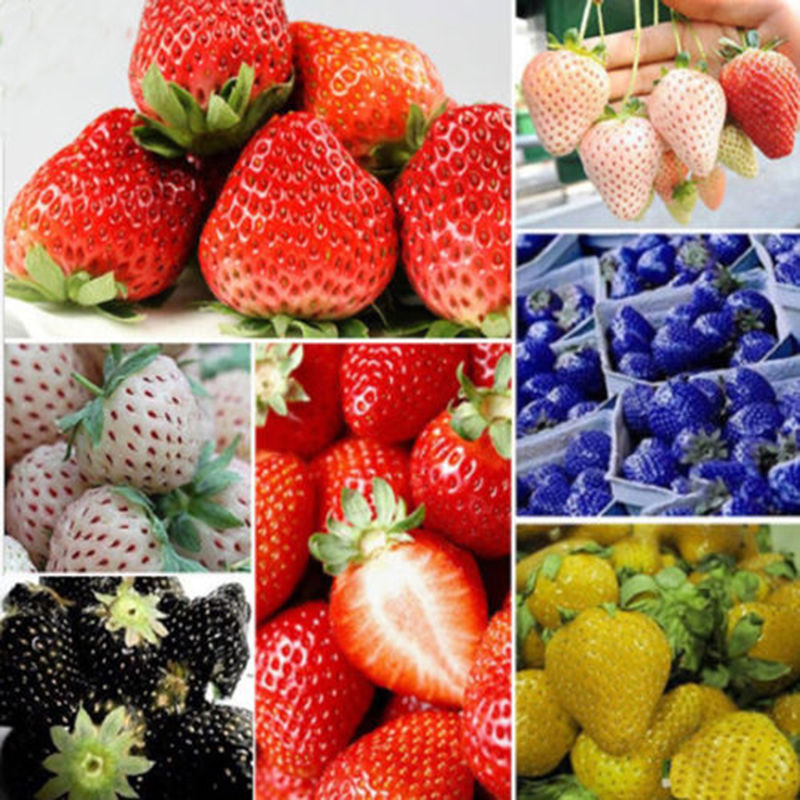 Direct Selling Indoor Plants Strawberry Seeds Rare Color Seed Fruit Seeds  Home Garden Diy For Bonsai
