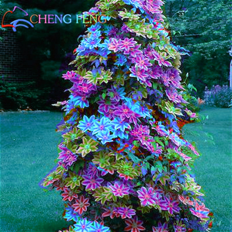Popular Indoor Winter Garden Buy Cheap Indoor Winter Garden lots