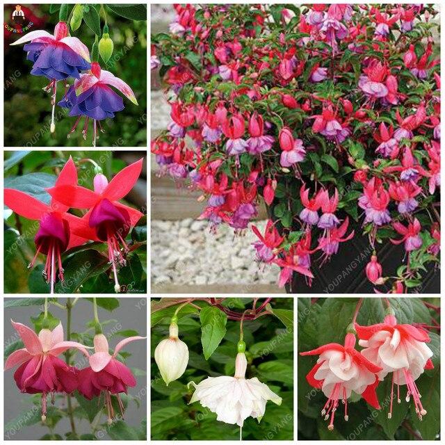 100 шт Редкие фонарики цвета фуксии растения Красивая Радуга фуксия садовые цветы и растения para jardin бонсай дерево для украшения сада