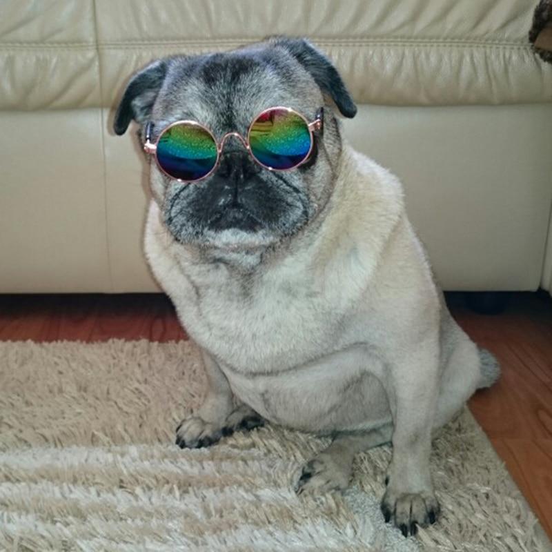 pet sunglasses_16