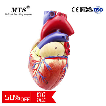 1:1 Human Heart anatomy Model high quality Medical Organ Anatomical Teaching Model 1 1 pvc high quality cardiac anatomy model medical teaching tool art tool instructional tool clinic figurines