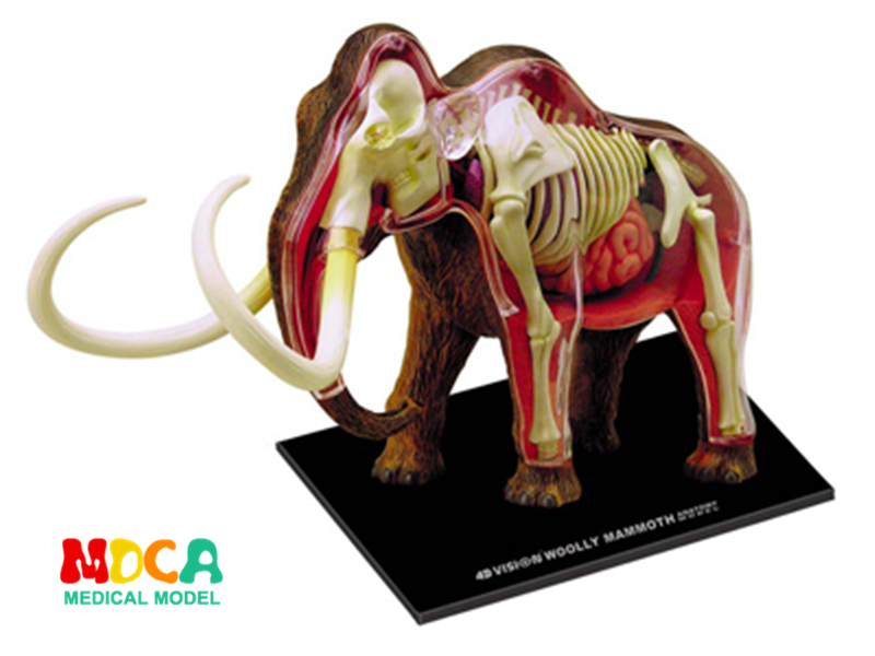 Mammoth 4d master puzzle Assembling toy Animal Biology organ anatomical model medical teaching model 4d master cat puzzle assembling toy animal biology organ anatomical model medical teaching skull skeleton model science toys