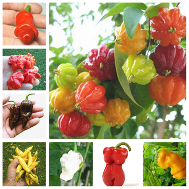 100 pcs/ bag Multicolored Pepper Hot Capsicum Annuum Balcony Ornamental Super Chili Vegetable Plant for Mini Garden Decor