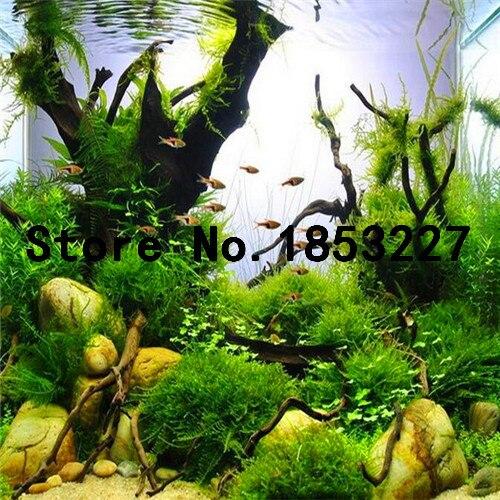 яванский мох живой купить