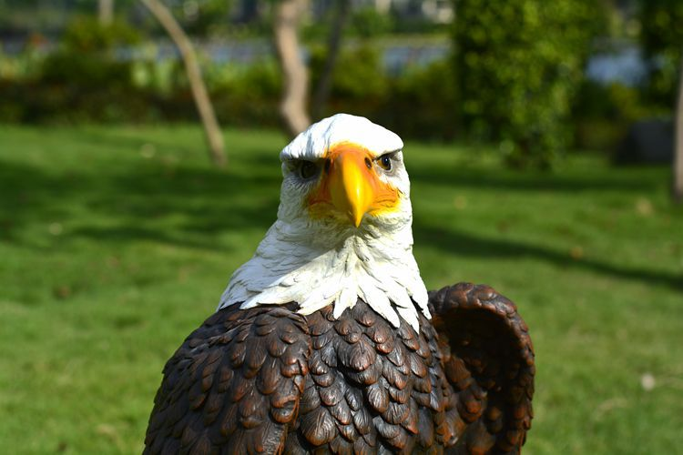 Eagle Garden Statues Outdoor Designs