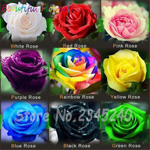 20PCS Flower Seed Holland Rose Seed Lover Gift Orange Green Rainbow RARE 23 Color To Choose DIY Home Gardening Flower