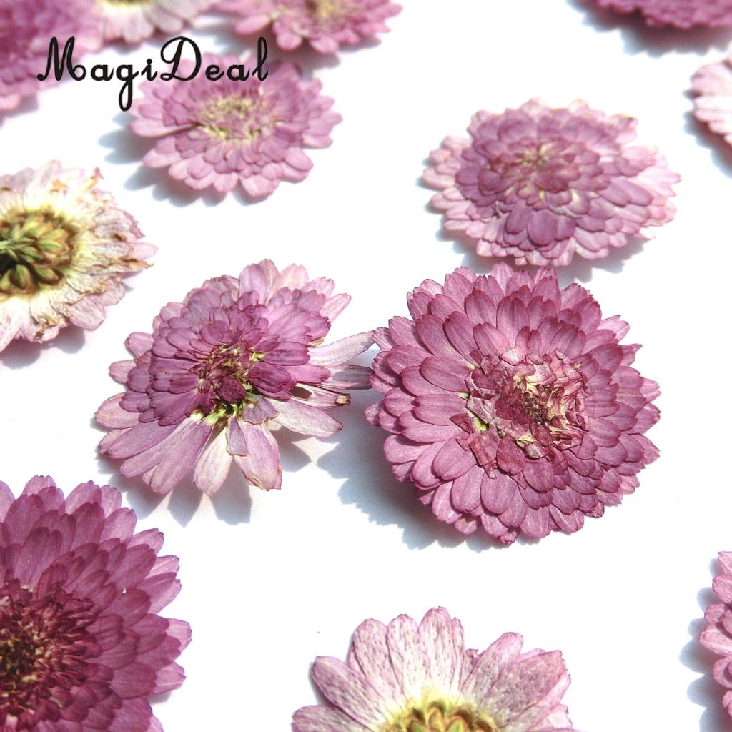 10x Pressed Real Dried Flower Dry Leaves for DIY Crafts Bookmark Card Making