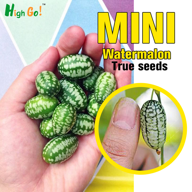 Potted/mini Watermelon/ Plant/garden Supplies/from Japan/friut Seeds