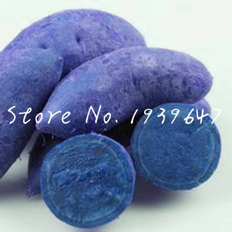 100 pcs Exotic Bonsai Raro de Batata Batatas Frutas E Vegetais Non GMO-Roxo Vermelho vasos de plantas Para Casa Jardin plantadores de plantas
