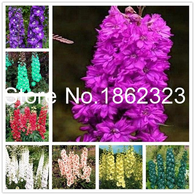 100 pcs Perennial Delphinium Grandiflorum Bonsai Potted Plants Outdoor Plant Natural Growth Bonsai Home Garden Decor plantas