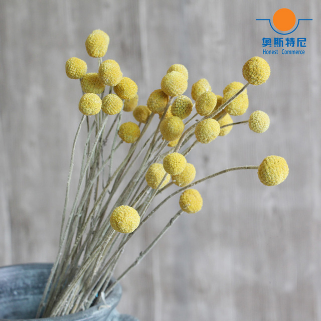 20pcs dried natural flower bouquets dried Craspedia flower bouquets ...