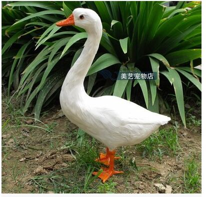 big new simulation duck toy lovely white lifelike duck about 25x14x38.5cm new big simulation wings pigeons toy polyethylene