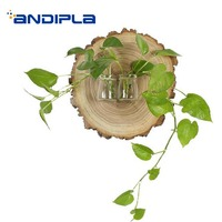 Creative Wall Vase Natural Wood Plate Transparent Glass Hydroponics Scindapsus Vases Flower Plant Holder Wall Decoration Crafts