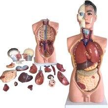 85 см мужской торс с внутренними элементами 19 частей, анатомическая модель человеческого торса