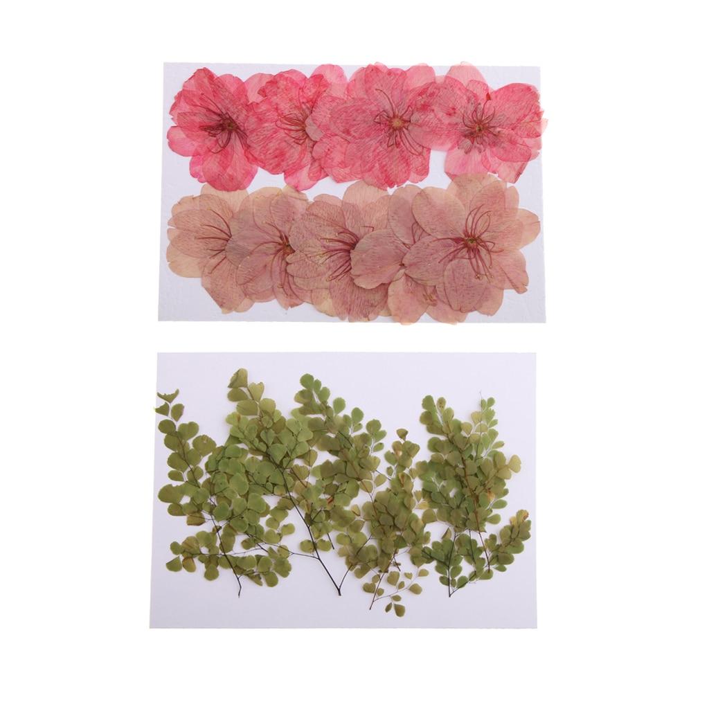 20 шт. натуральный прессованный высушенный цветок вишни Сакура цветы адиантум для изготовления карт DIY искусство ремесла