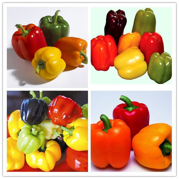 Colorful Yellow Purple Red Green Blue White Mix Sweet Bell Hot Pepper Seeds Vegetables Paprika – 100 PCS